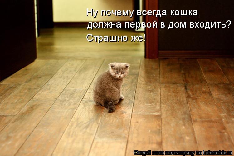 Котоматрица: должна первой в дом входить? Страшно же! Ну почему всегда кошка