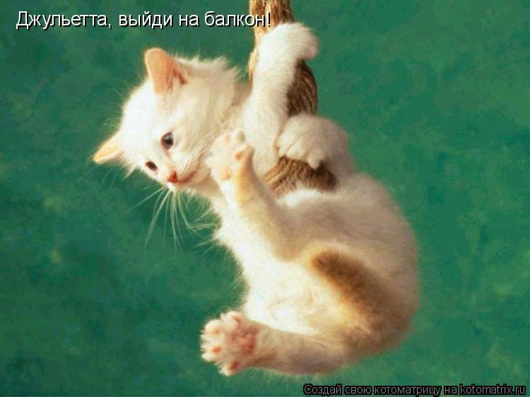 Котоматрица: Джульетта, выйди на балкон!