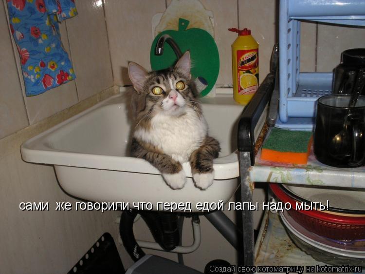 Котоматрица: сами  же говорили,что перед едой лапы надо мыть!