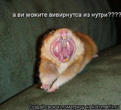 Котоматрица: а ви можите вивирнутса из нутри????