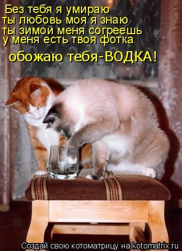 Котоматрица: Без тебя я умираю  ты любовь моя я знаю  ты зимой меня согреешь  у меня есть твоя фотка  обожаю тебя-ВОДКА!