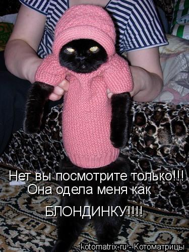 Котоматрица: Нет вы посмотрите только!!! Она одела меня как БЛОНДИНКУ!!!!