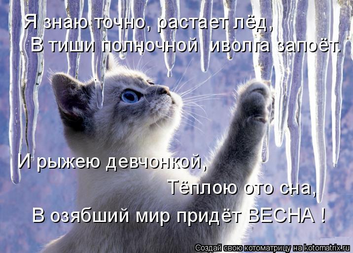 Котоматрица: Я знаю точно, растает лёд,  В тиши полночной  иволга запоёт. И рыжею девчонкой, Тёплою ото сна, В озябший мир придёт ВЕСНА !
