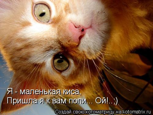 Котоматрица: Я - маленькая киса, Пришла я к вам попи... Ой!..;)