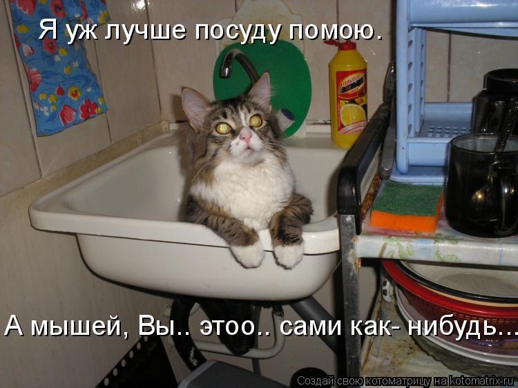 Котоматрица: Я уж лучше посуду помою. А мышей, Вы.. этоо.. сами как- нибудь...