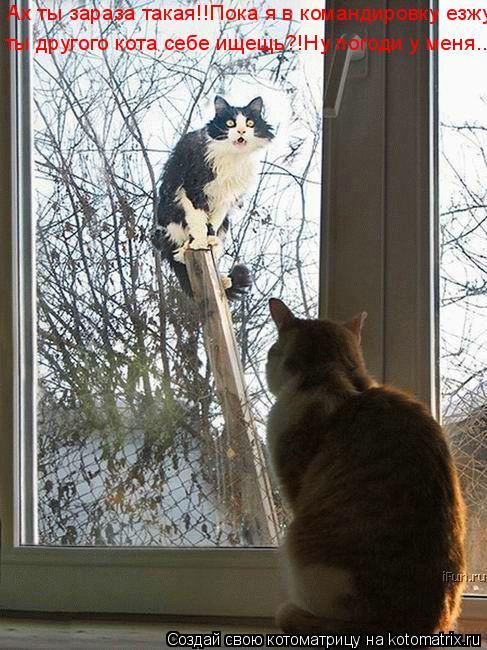 Котоматрица: Ах ты зараза такая!!Пока я в командировку езжу ты другого кота себе ищещь?!Ну погоди у меня..