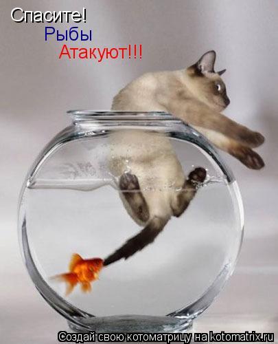 Котоматрица: Спасите! Рыбы Атакуют!!!