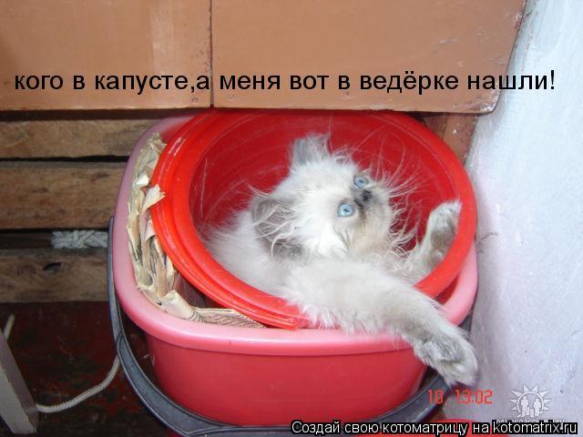 Котоматрица: кого в капусте,а меня вот в ведёрке нашли!