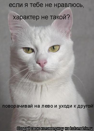 Котоматрица: если я тебе не нравлюсь, характер не такой? поворачивай на лево и уходи к другой!