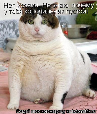 Котоматрица: Нет, хозяин. Не знаю, почему у тебя холодильник у тебя холодильник пустой!