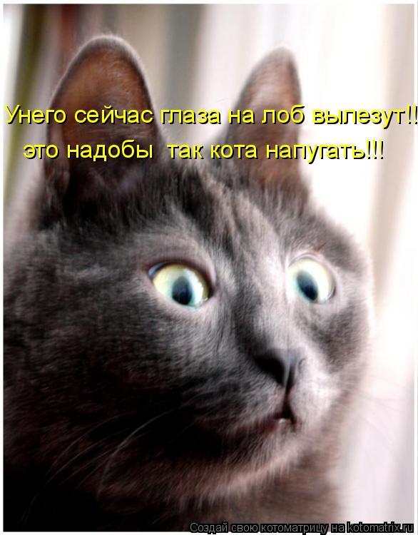 Котоматрица: это надобы  так кота напугать!!! Унего сейчас глаза на лоб вылезут!!!