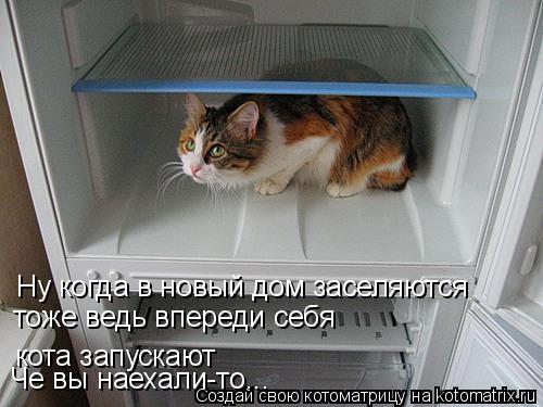 Котоматрица: Ну когда в новый дом заселяются тоже ведь впереди себя  кота запускают Че вы наехали-то...