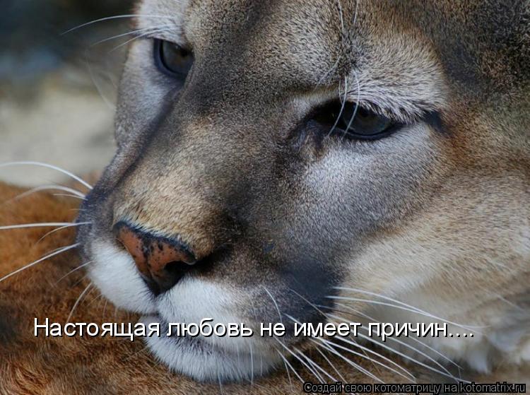 Котоматрица: Настоящая любовь не имеет причин....