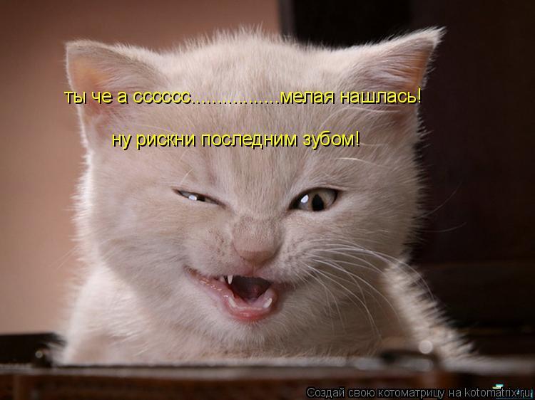 Котоматрица: ты че а сссссс.................мелая нашлась! ну рискни последним зубом!