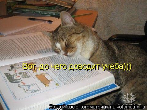 Котоматрица: Вот, до чего доводит учёба)))