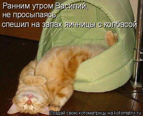 Котоматрица: Ранним утром Василий,  не просыпаясь, спешил на запах яичницы с колбасой