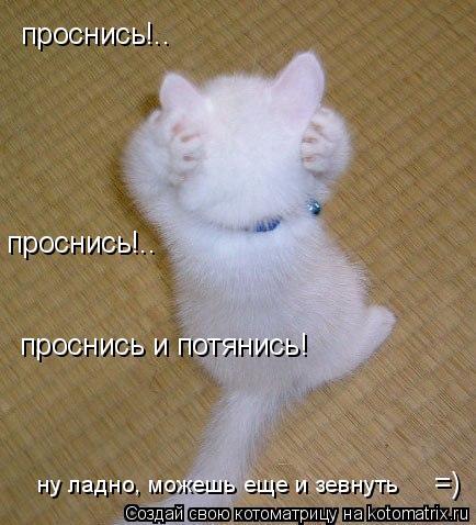Котоматрица: проснись!.. проснись!.. проснись и потянись!  =) ну ладно, можешь еще и зевнуть