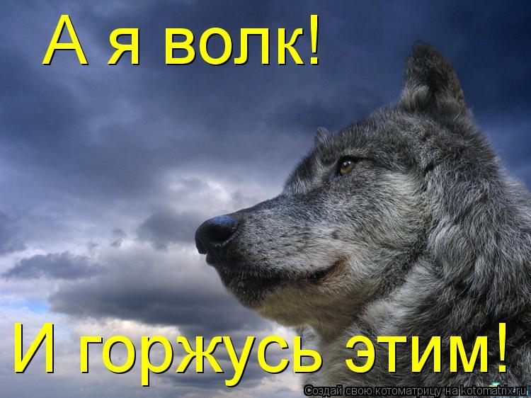 Котоматрица: А я волк! И горжусь этим!