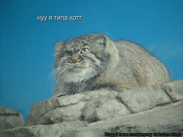Котоматрица: нуу я типа котт