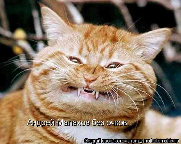Котоматрица: Андрей Малахов без очков...