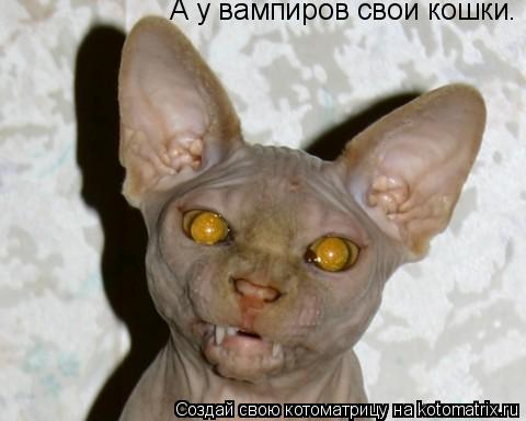 Котоматрица: А у вампиров свои кошки.