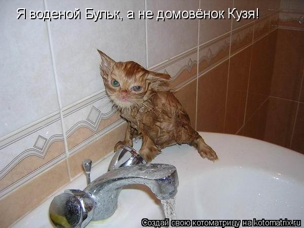 Котоматрица: Я воденой Бульк, а не домовёнок Кузя!