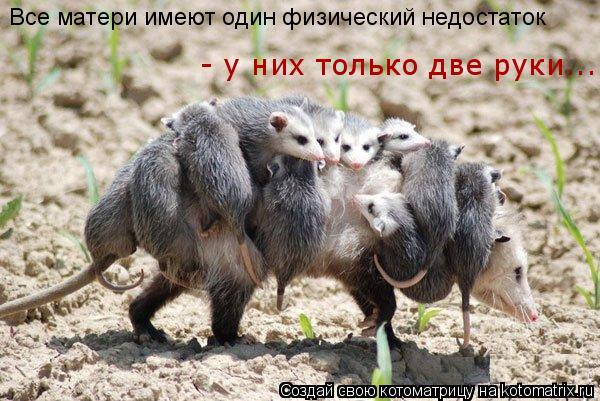 Котоматрица: Все матери имеют один физический недостаток  - у них только две руки...