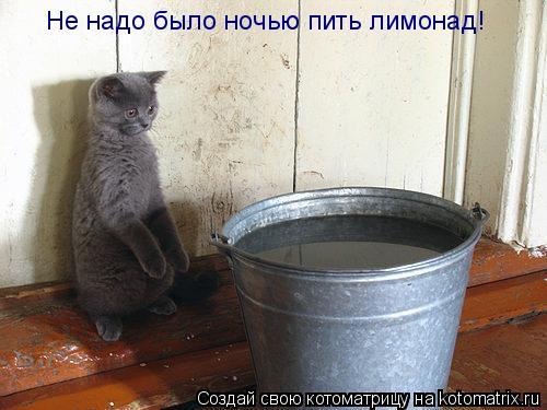 Котоматрица: Не надо было ночью пить лимонад!