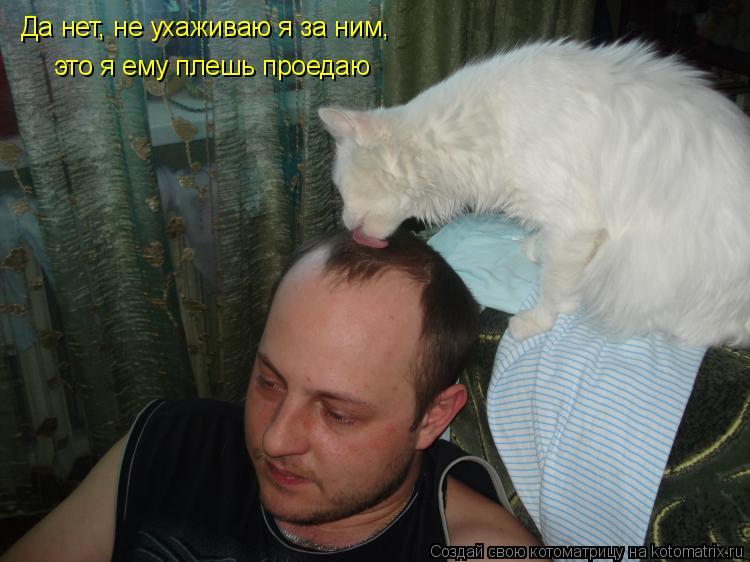 Котоматрица: Да нет, не ухаживаю я за ним, это я ему плешь проедаю