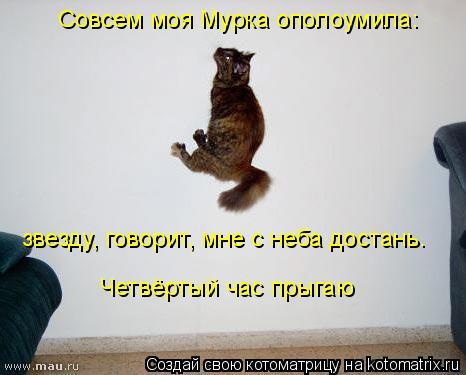 Котоматрица: Совсем моя Мурка ополоумила: звезду, говорит, мне с неба достань. Четвёртый час прыгаю
