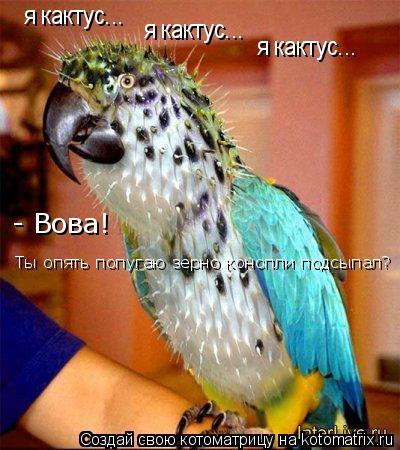 Котоматрица: я кактус... я кактус... я кактус... - Вова!  Ты опять попугаю зерно конопли подсыпал?