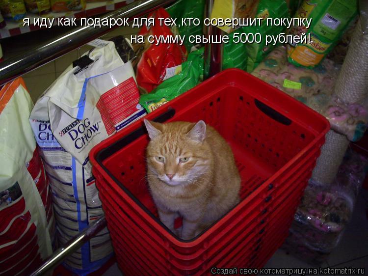 Котоматрица: я иду как подарок для тех,кто совершит покупку на сумму свыше 5000 рублей!