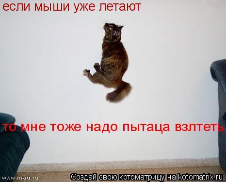Котоматрица: если мыши уже летают то мне тоже надо пытаца взлтеть