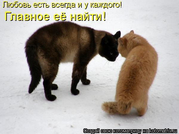 Котоматрица: Любовь есть всегда и у каждого! Главное её найти!
