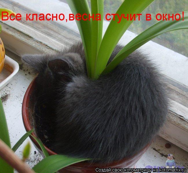 Котоматрица: Все класно,весна стучит в окно!