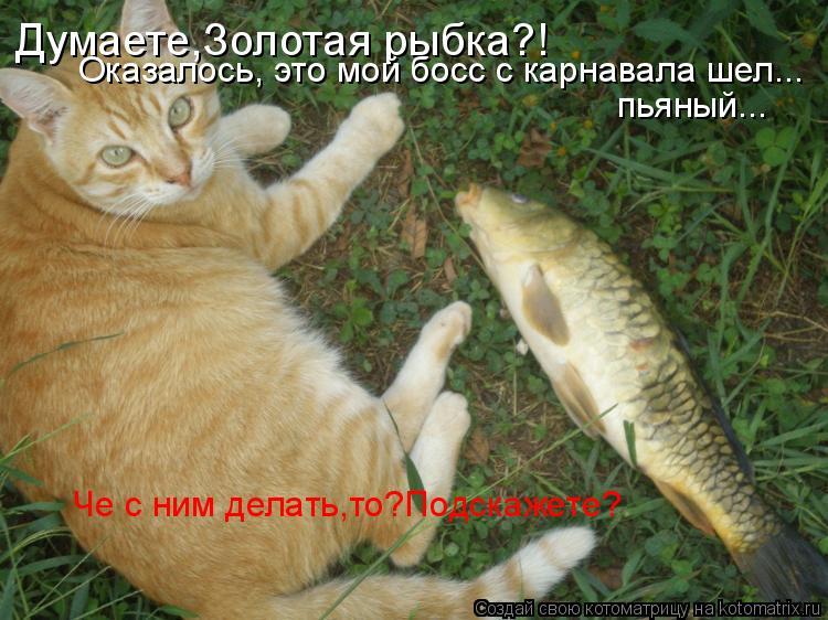 Котоматрица: Думаете,Золотая рыбка?! Оказалось, это мой босс с карнавала шел... пьяный... Че с ним делать,то?Подскажете?