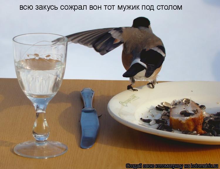 Котоматрица: всю закусь сожрал вон тот мужик под столом