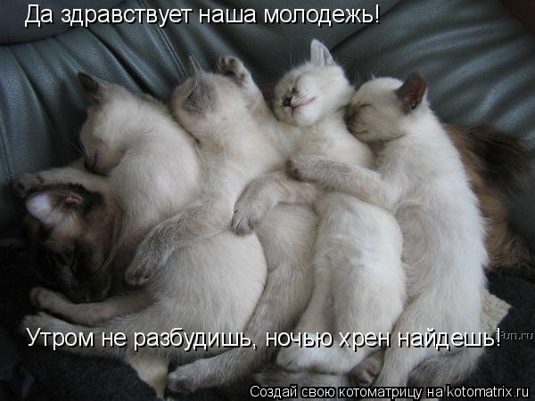 Котоматрица: Да здравствует наша молодежь! Утром не разбудишь, ночью хрен найдешь!