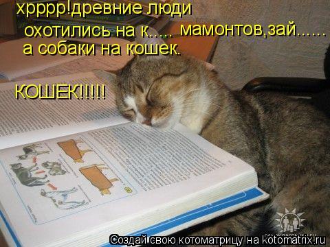 Котоматрица: хрррр!древние люди  охотились на к..... мамонтов,зай...... а собаки на кошек. КОШЕК!!!!!