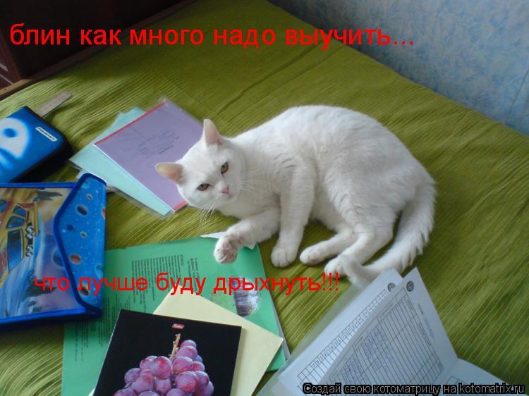 Котоматрица: блин как много надо выучить... блин как много надо выучить... что лучше буду дрыхнуть!!!