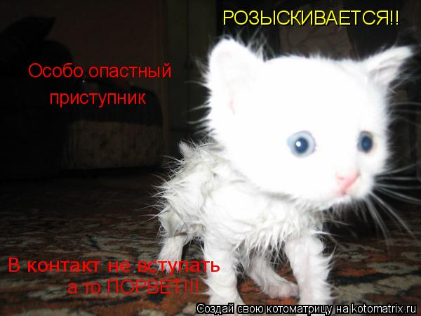 Котоматрица: РОЗЫСКИВАЕТСЯ!! В контакт не вступать Особо опастный приступник а то ПОРВЕТ!!!