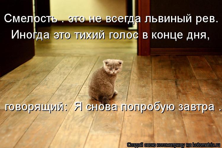 Котоматрица: Смелость – это не всегда львиный рев.   Иногда это тихий голос в конце дня,   говорящий: «Я снова попробую завтра».