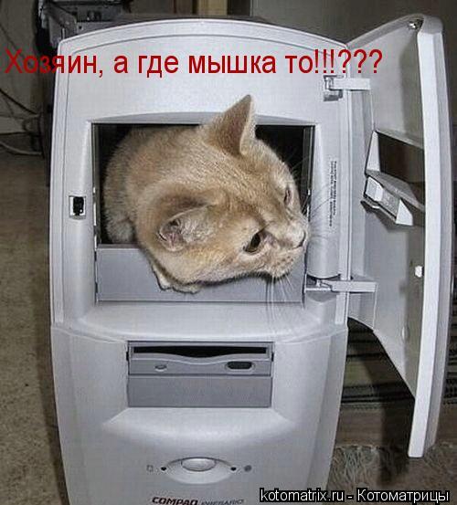 Котоматрица: Хозяин, а где мышка то!!!???