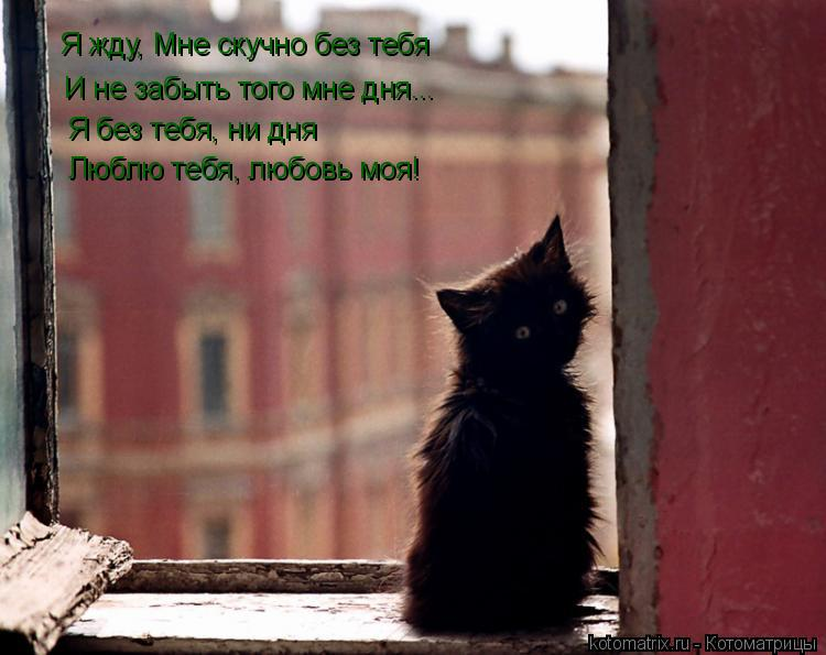 Котоматрица: Я жду,  Я жду, Мне скучно без тебя И не забыть того мне дня... Я без тебя, ни дня Люблю тебя, любовь моя!