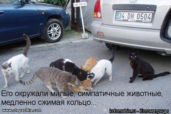 http://kotomatrix.ru/images/lolz/2009/03/14/6C.jpg