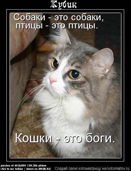 Котоматрица: Собаки - это собаки, птицы - это птицы. Кошки - это боги.