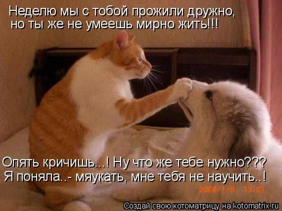 Котоматрица: Неделю мы с тобой прожили дружно, но ты же не умеешь мирно жить!!! Опять кричишь...! Ну что же тебе нужно??? Я поняла..- мяукать, мне тебя не научит