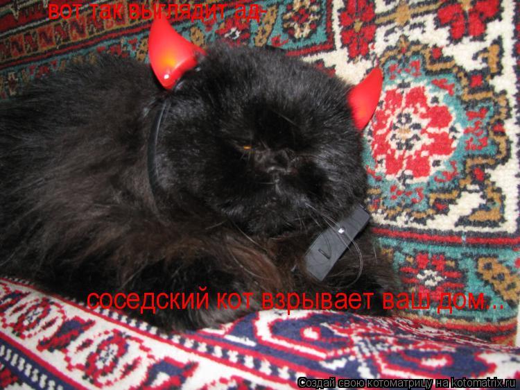 Котоматрица: вот так выглядит ад- соседский кот взрывает ваш дом...