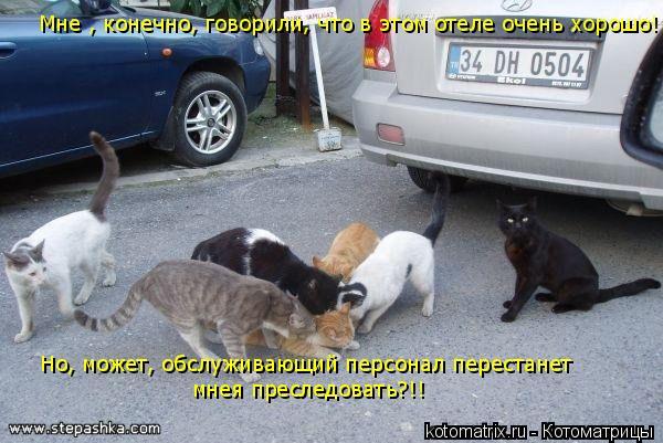 Котоматрица: Мне , конечно, говорили, что в этом отеле очень хорошо! Но, может, обслуживающий персонал перестанет мнея преследовать?!!