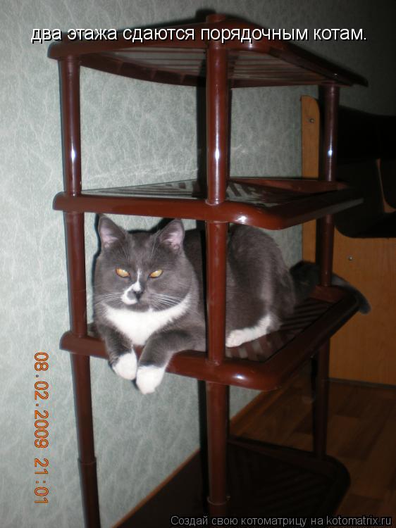 Котоматрица: два этажа сдаются порядочным котам.